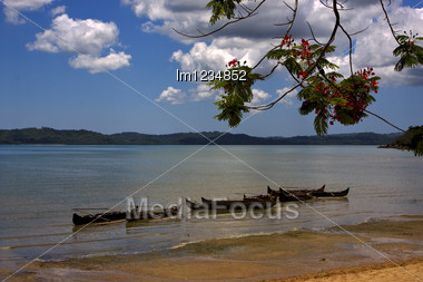Madagascar Branch Boat Palm Lagoon And Coastline Stock Photo