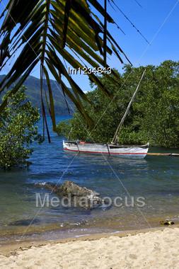 Madagascar Nosy Be Rock Stone Branch Boat Palm Lagoon And Coastline Stock Photo