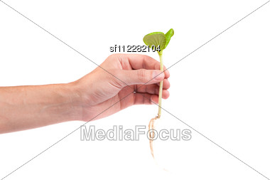 Male Hand Hold A Small Sprout And An Earth Handful Isolated Stock Photo