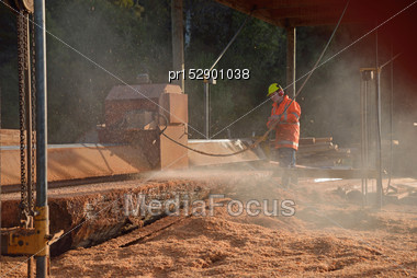 Man Cutting Up A 500 Year Log Of New Zealand Red Pine With A Portable Sawmill, Westland, New Zealand. Native Timber Is Milled Under Permit In New Zealand Stock Photo