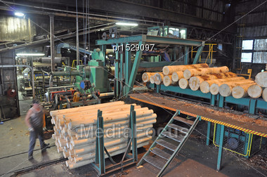 Man Feeds Pinus Radiata Logs Into The Veneer Stripper At A Plywood Factory Stock Photo
