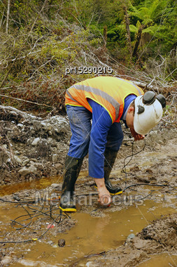 Man Placing Geophones In The Ground For A Seismic Reflective Survey On The West Coast Of New Zealand Stock Photo