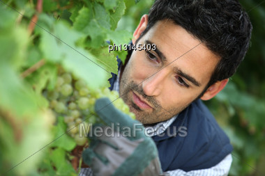 Man Working In His Vineyard Stock Photo