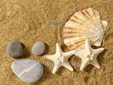 Marine Still Life Over Sand In Bright Sunlight Stock Photo