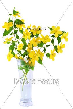 Marsh Marigold Yellow Wildflowers In Vase Stock Photo