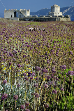 Methoni Castle At Sunny Summer Day, Purple Weed In Foreground, Blurred Hills In Background Stock Photo