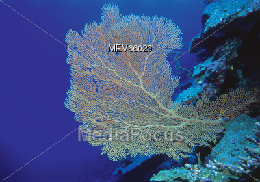 coral underwater sea Stock Photo
