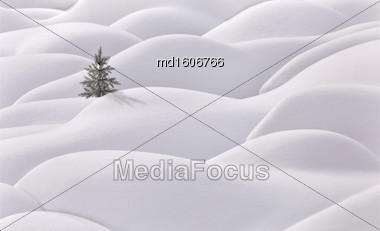 Moguls And Tree Evergreen White Snow Hills Stock Photo