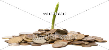 Money Sprouts. Business Concept Stock Photo