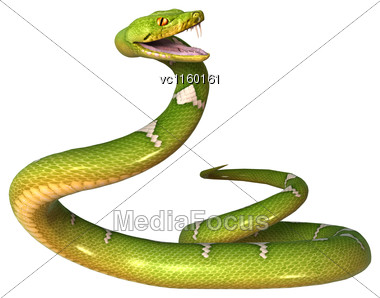 Morelia Viridis, Or Green Tree Python, Or Herpetoculture Hobby, Chondro Isolated On White Background Stock Photo