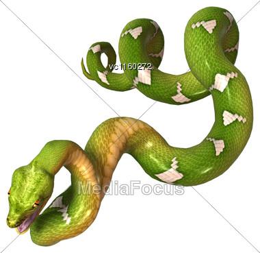 Morelia Viridis, Or Green Tree Python, Or Herpetoculture Hobby, Chondro Isolated On White Background Stock Photo