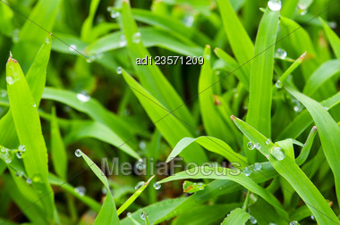 Morning Dew On Grass Background Stock Photo