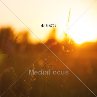 Morning On The Meadow, Abstract Natural Backgrounds Stock Photo