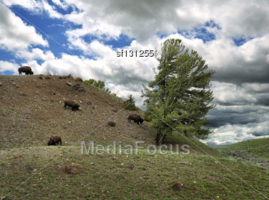Mountain Landscape With Bisons And Dramatic Sky Stock Photo