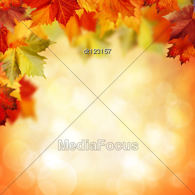 Natural Beauty. Autumnal Abstract Backgrounds For Your Design Stock Photo