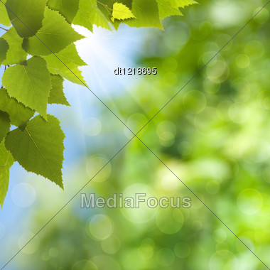 Natural Summer And Spring Backgrounds With Beauty Bokeh Stock Photo