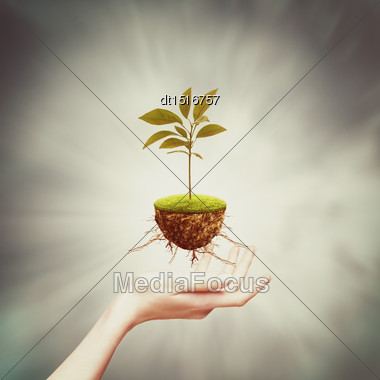 New Life From One Bud, Abstract Eco Backgrounds Stock Photo