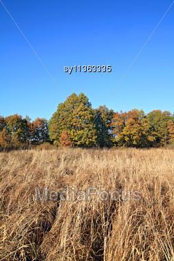Oak Copse On Autumn Field Stock Photo