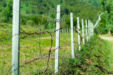 Old Barb Wire Fence With Grass In Field Stock Photo