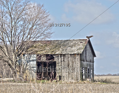 Old Broken Barn With A Turkey Vulture On The Roof Stock Photo