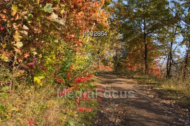 An Old Forest Road Leads Into The Fall Foliage Stock Photo