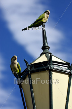 Old Green Street Lamp Parrot And Clouds In Buenos Aires Argentina Stock Photo