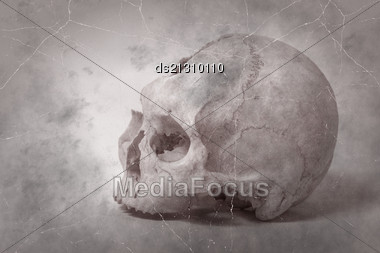 Old Photo Side View Of Human Skull. Single Skull . Human Skull On A White Background Stock Photo