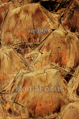 Old Trunk Of The Palm Tree Background Stock Photo