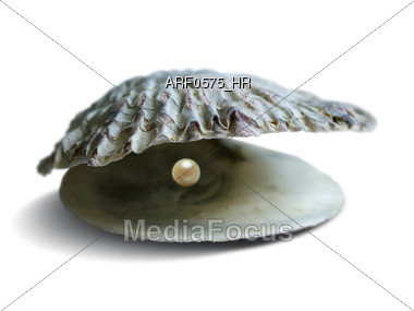Open Clam Shell With Pearl