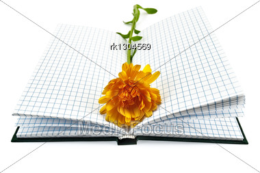 Opened Notebook With Yellow Marigold Flower Isolated Stock Photo