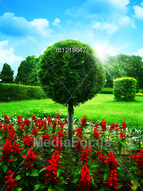 Optimistic Garden. Abstract Natural Backgrounds Under Blue Skies Stock Photo