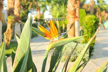 Orange Flowers At Sun Light Stock Photo