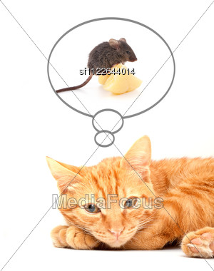Orange Tabby Dreaming Of Mouse Stock Photo