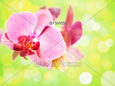Orchid Flower Over Abstract Green Backgrounds Stock Photo