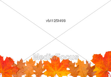 Ornament From Autumn Leaves Of Different Colour, From Different Trees Stock Photo