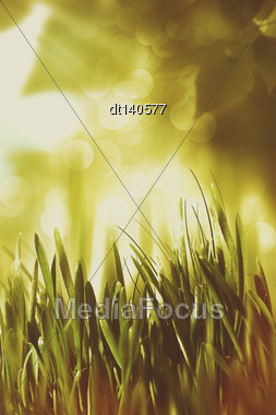 Overcoast Summer Backgrounds With Faded Colors Stock Photo