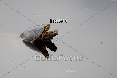 Painted Turtle Sunning Itself On A Log Stock Photo