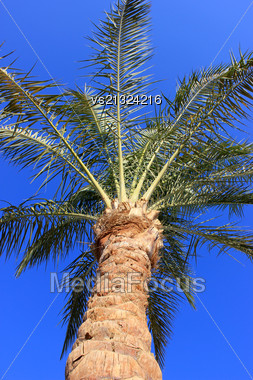 Palm Tree At Sunset Light Stock Photo