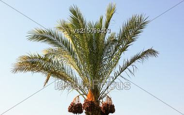 Palm Tree On Blue Sky Background At Sun Light Stock Photo