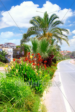 Palm Tree With Flowers In Tropical Country Stock Photo