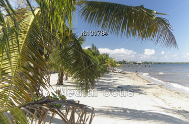 Palm Trees On A Caribbean Beach With White Sand Stock Photo
