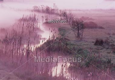 Park Raab, Austria, Marsh Reeds In Mist Stock Photo