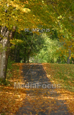 Path in the Fall Stock Photo