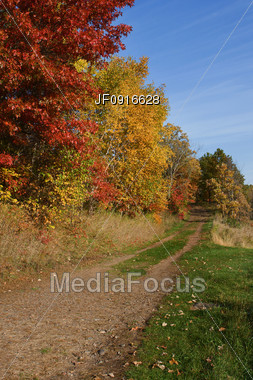 Path into the Autumn Forest Stock Photo