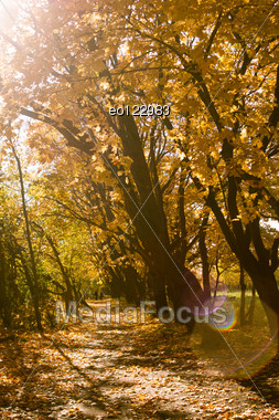 Path Through Colorful Orange Maple Trees In Autumn. Stock Photo