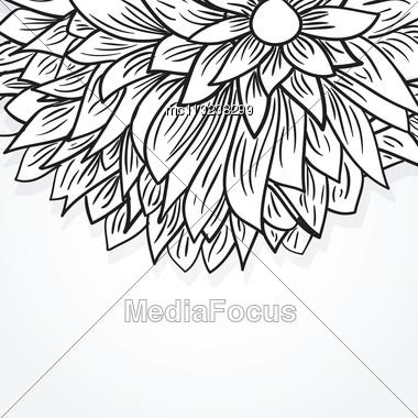 Peony Flower Stock Photo