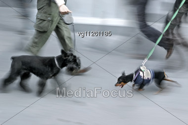 People Walking On The Street With Dogs On Leashes Stock Photo