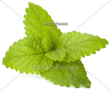 Peppermint Or Mint Bunch Isolated On White Background Cutout Stock Photo