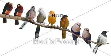 Perching Birds Isolated On White Background Stock Photo