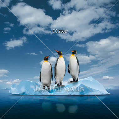 Photo Composition - Three Penguins On Ice Stock Photo